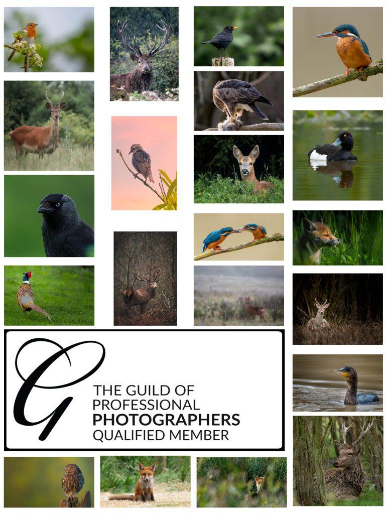 Guild of Photographers Achievements