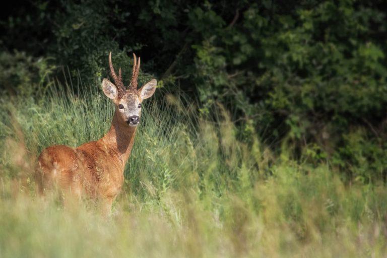 Deer Workshop